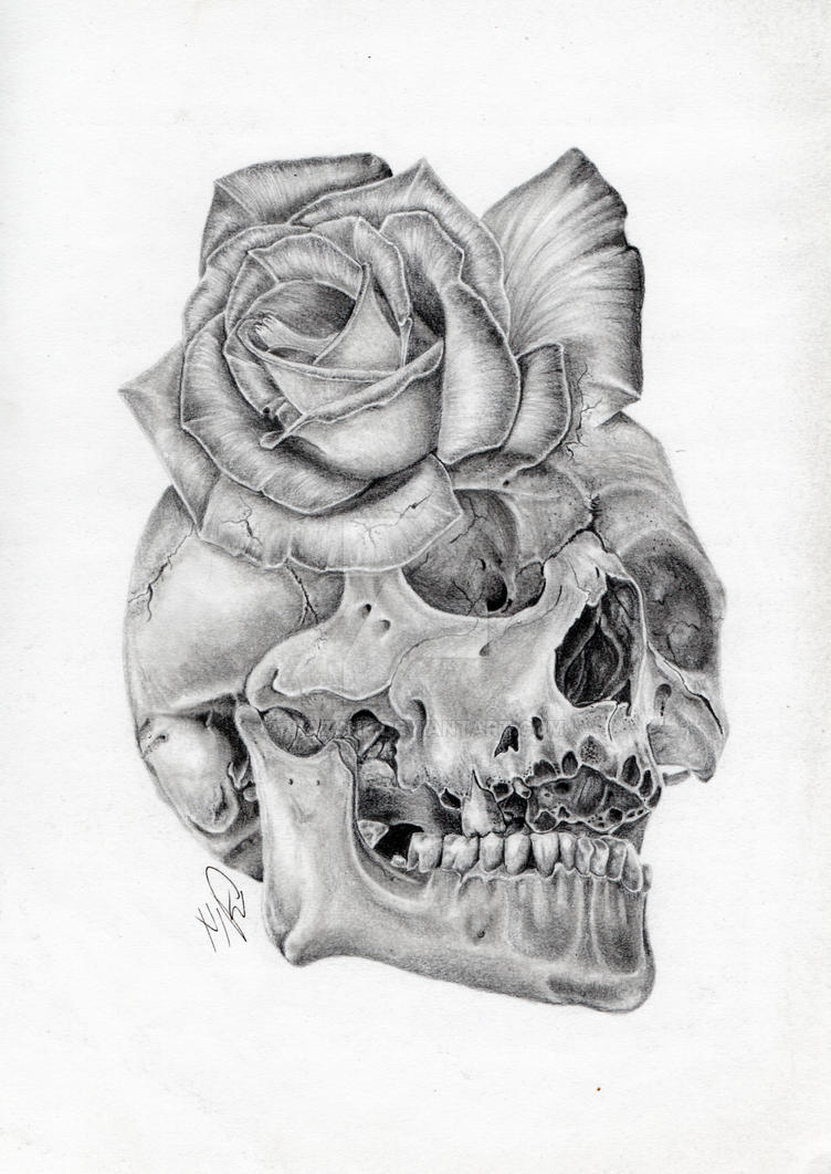 Skull Rose morph graphite pencil drawing by Wazche on ...