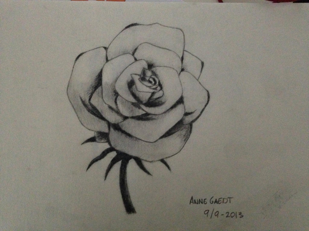 Open Rose - Sketch Drawing