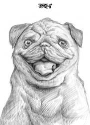 01 Pug Sketch