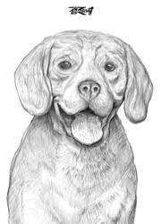 02 Beagle Sketch