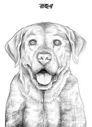 03 Labrador Sketch