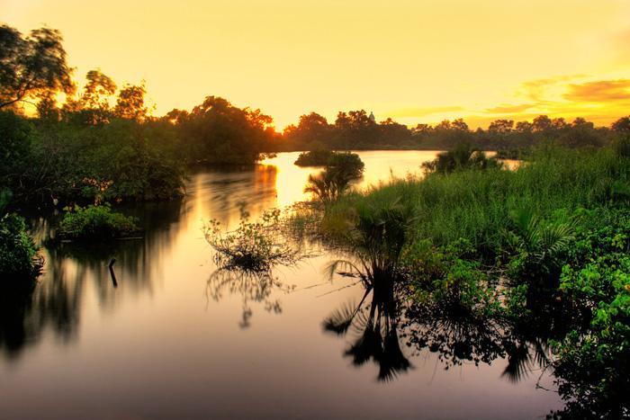 Mangrove by adityapudjo