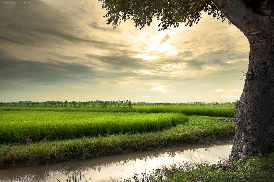Nature Frame by adityapudjo