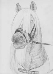horse 2 by magrietwierts