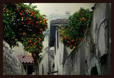 tangerine by Qje