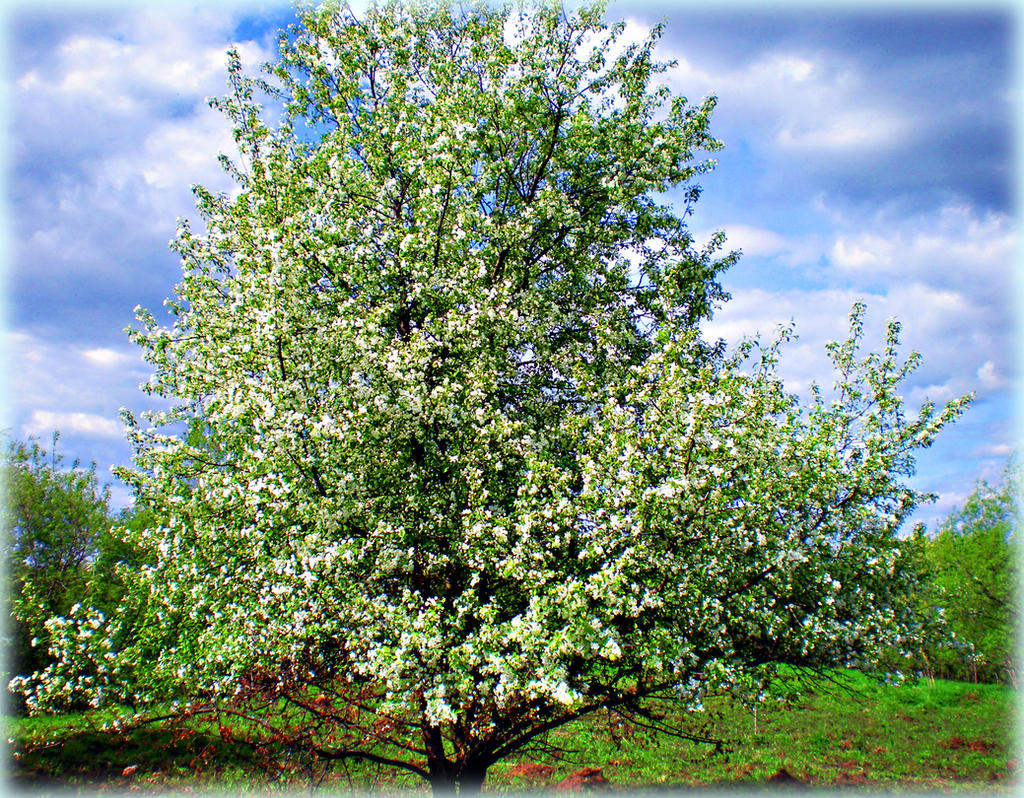 The White Tree by Lirulin-yirth