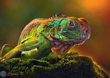 Baby Iguana by Cyrus-K