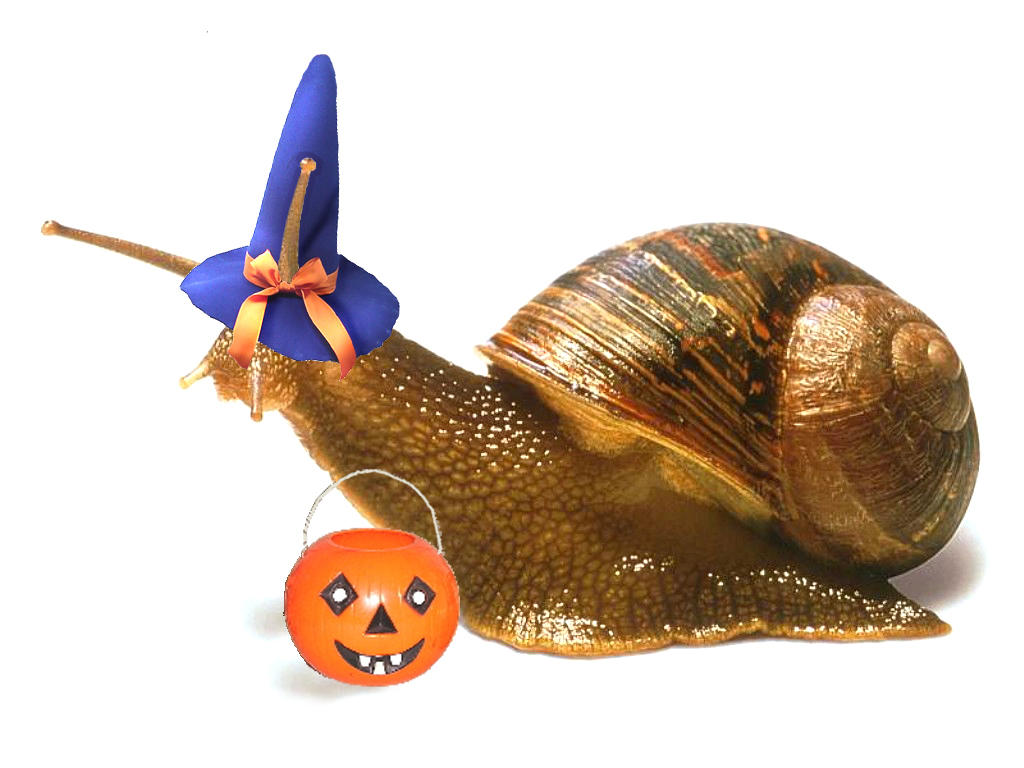 October Snail by colormist