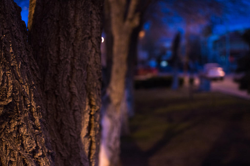 A tree in the night. by Issacfunny