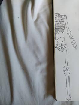 demi skelet