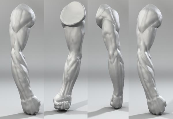 Arm Sculpt Study by NightmareGK13