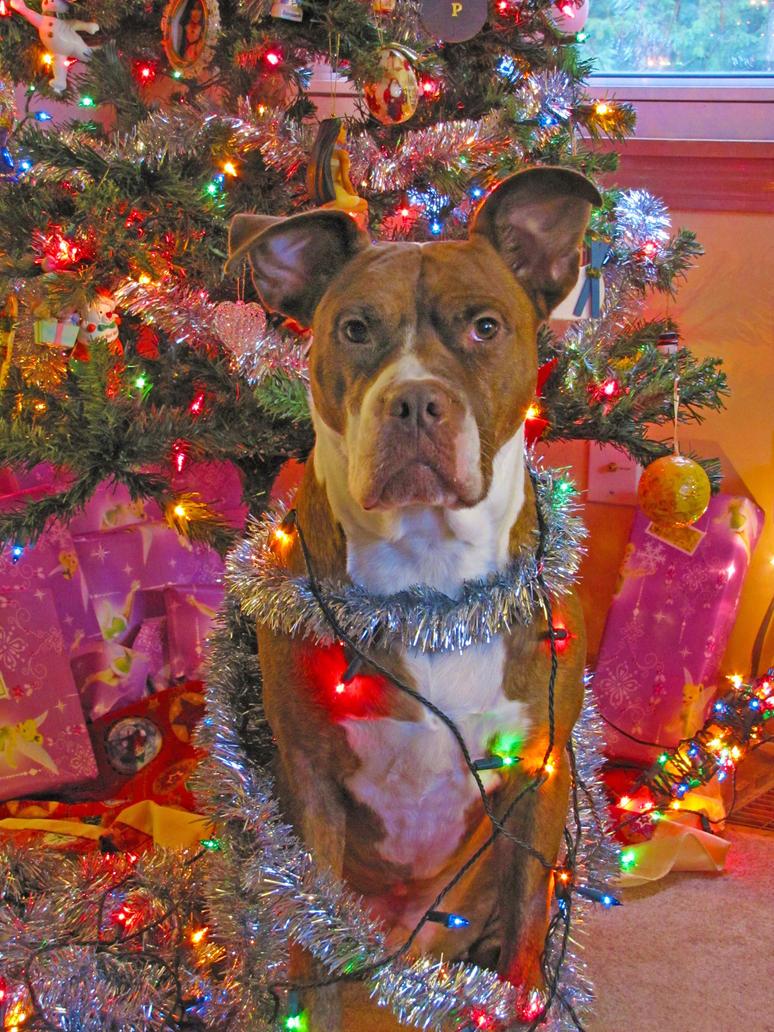 Merry Christmas Pitbull by PittyLova on DeviantArt