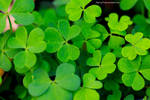 To Be In Clover