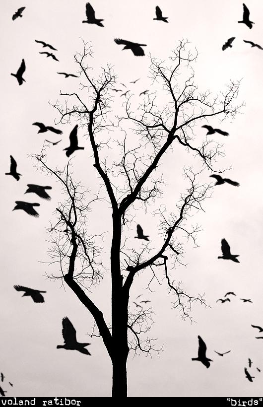 ...редких птиц в мире.  Снимки были сделаны...