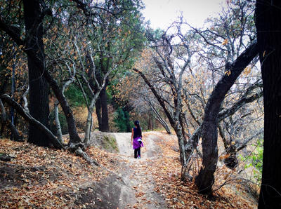 The Woods of 1000 Oaks by TheMysticFlight
