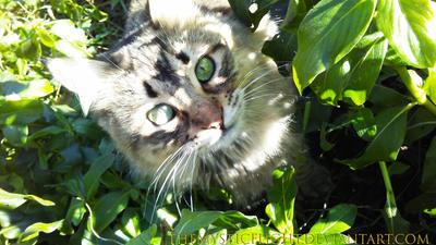 Monochromatic Cat by TheMysticFlight