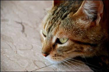 cat by Itamar5360