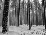 Black and White stripes by KaniJonas