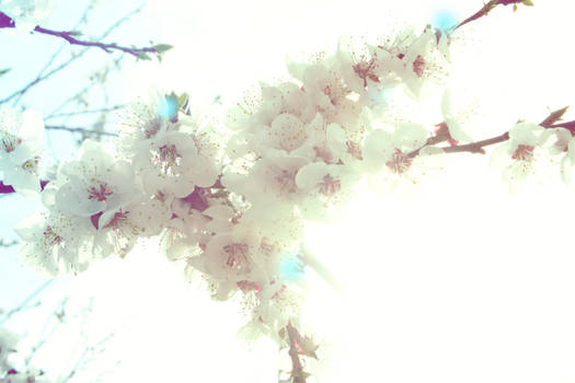 Twinkling Flower Tree