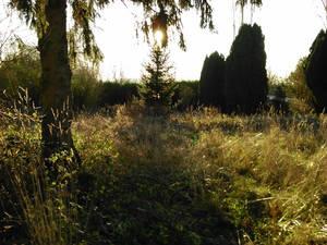 forgotten place 01