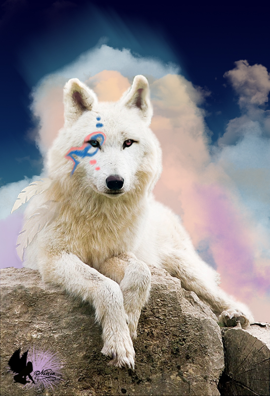 Loup indien by Xiao-Ninie