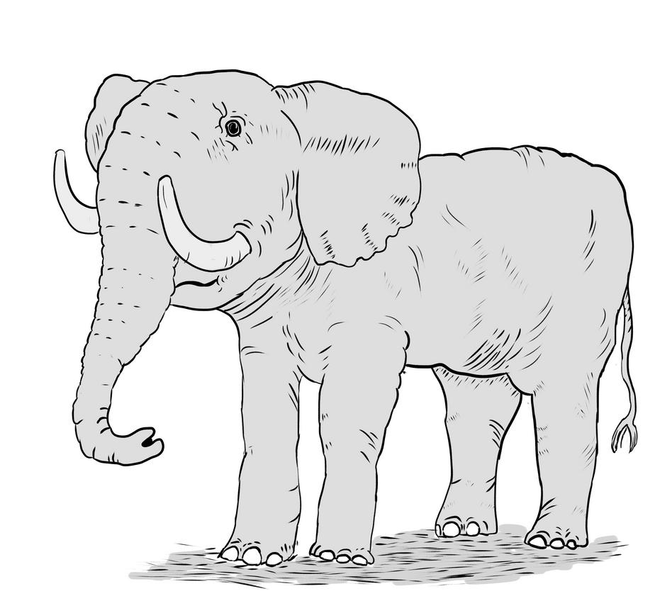 Elephant by Sleepy1ntrovert