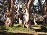 Circle of Trees 2