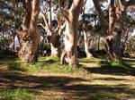 Circle of Trees 4