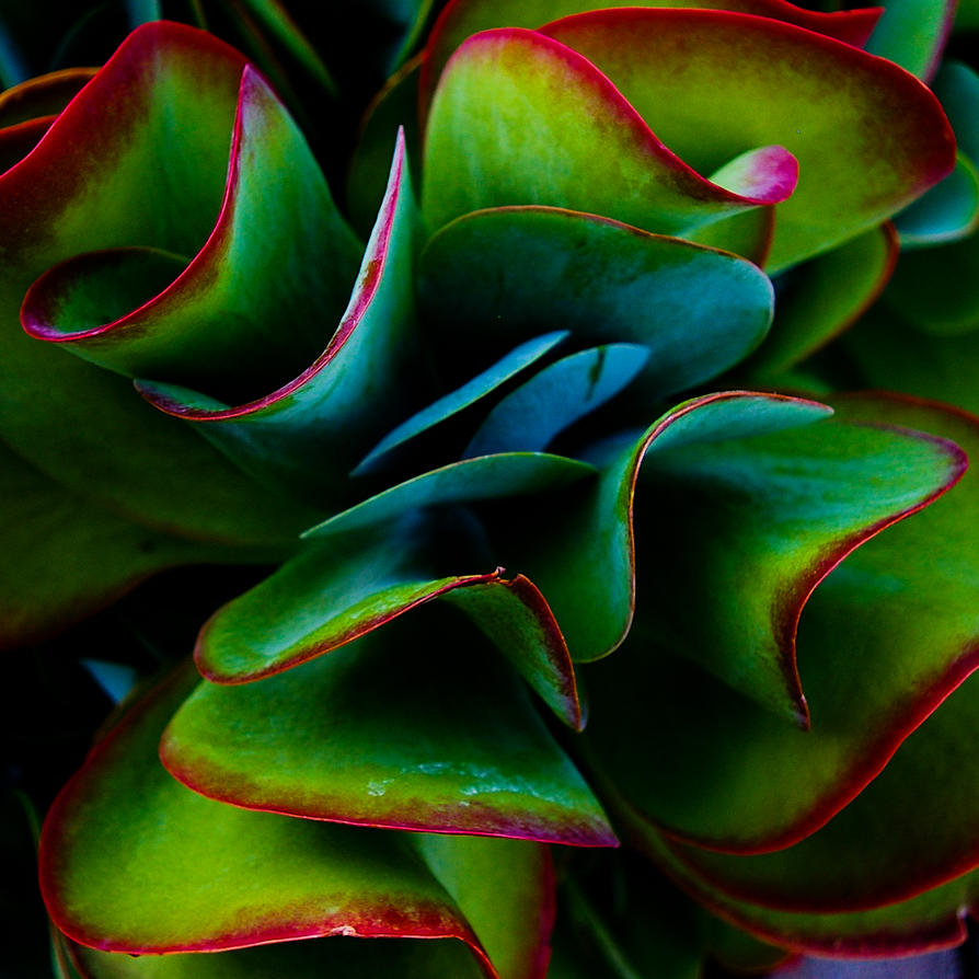 Ribbons by ruabuddha