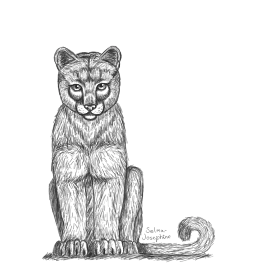 Mountain Lion by Selma-Josephine