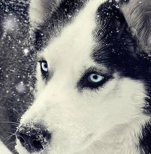 .Snow-storm