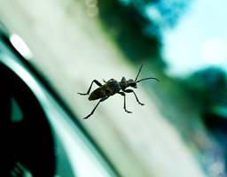 Bug on drivers side window