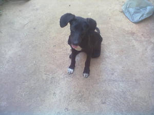 My dog 3