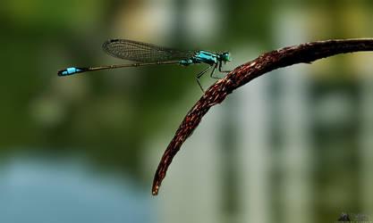 Dragonfly by LeWelsch