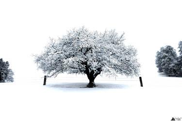 Tree In White by LeWelsch