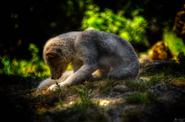 Tired by LeWelsch