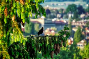 Singing Bird by LeWelsch