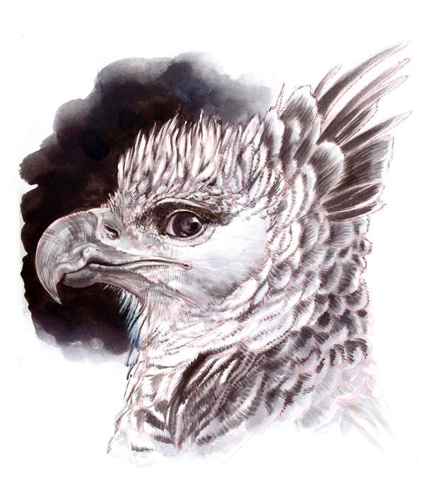 .:: Inktober 2014 - harpy eagle ::. by Maiwenn
