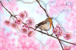 .:: Singing spring ::.