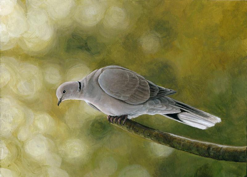 Decembird : Drab by Maiwenn