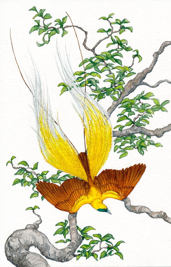 Decembird : Bird of paradise by Maiwenn