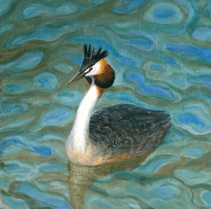 Decembird : Swimming by Maiwenn