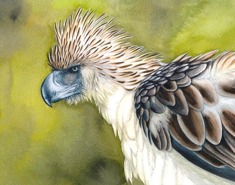 Decembird : Endangered by Maiwenn