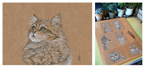 SOLD : Cat portrait by Maiwenn