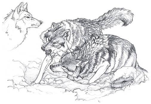 Warmup : Wolves