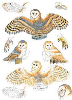 Barn owl references
