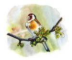European goldfinch by Maiwenn
