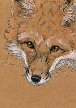 Kraft sketch - Fox
