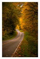 An Autumn Drive by MushroomMagic