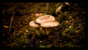 3 Little Mushrooms by MushroomMagic